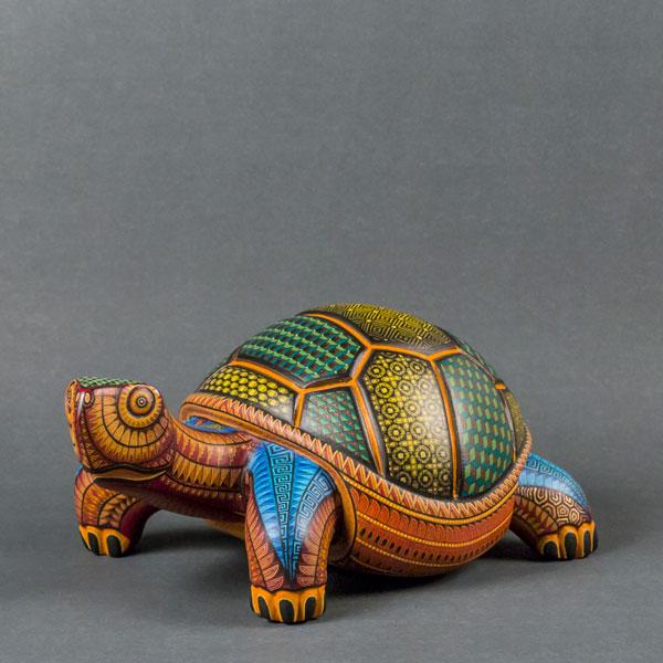 Oaxacan_Tortoise